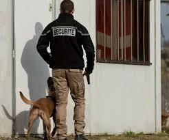 agent cynophile de sécurité Rouen