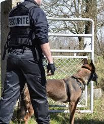agent de sécurité cynophile Rouen